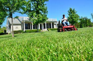 entretien pelouse avec tracteur tondeuse